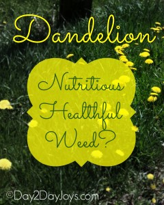 Dandelion: a Nutritious Healthful Weed