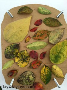 Make Your Own Leaf Press